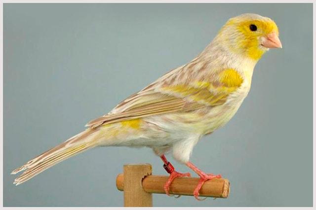 isabel-amarillo-min