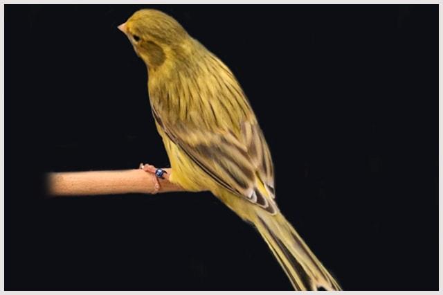 agata-intenso-amarillo-marfil-min