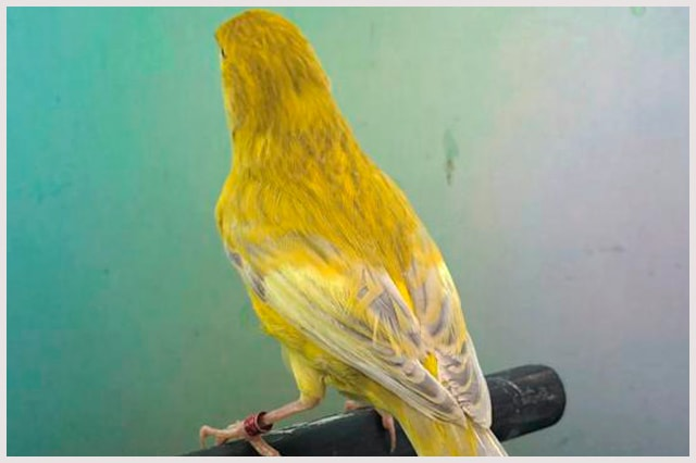 agata-jaspe-intenso-amarillo-min