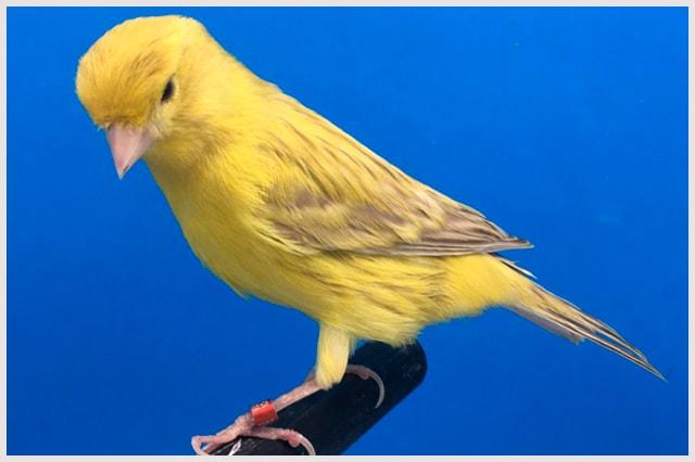 isabel-intenso-amarillo-marfil-min