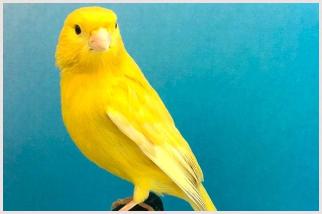 isabel-jaspe-intenso-amarillo-min